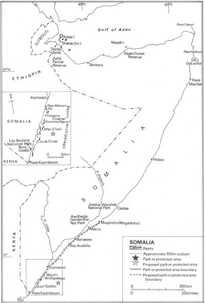 Picture Of Somalias Coral Reefs